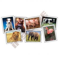 Oblíbená zvířata